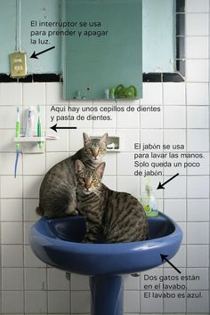 Spanish Reading and Speaking Activity: Gatos en el baño - Spanish Playground    Comprehension questions in the post.  http://spanishplayground.net/spanish-reading-activity-gatos-en-el-bano/