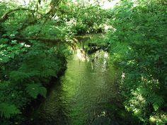Pix For > Hoh River Rainforest
