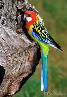 Native Birds | John's Photos