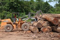 Pregopontocom Tudo: Maior desmatamento desde 2008,a Amazônia perde 7.989 km² de floresta nativa...