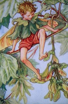 Cicely Mary Barker - FLOWER FAIRY baby fairies have wings that look like seed pods. They shed their wings at autumn and sprout their adult butterfly wings Cicely Mary Barker, Gravure Illustration, Fantasy Illustration, Alberto Giacometti, Fairy Pictures, Vintage Fairies, Beautiful Fairies, Flower Fairies, Fairy Art
