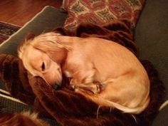 Asleep...sooooo cute!