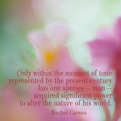 Abstract marronier blossoms with quote by Rachel Carson. #wonder #photography #flower #fleur #Rebekah West