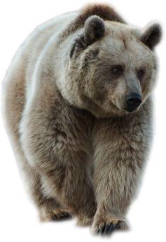 Brown Bear by LOVEMAYU on DeviantArt