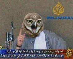 owljazeera