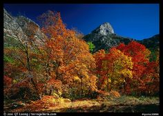 Fall foliage and cliffs, McKittrick Canyon. Guadalupe Mountains National Park (color)