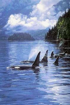 There is very little interaction between resident and transient orcas, and they have very different lifestyles and food preferences. Resident orcas eat fish exclusively, whereas transients eat only marine mammals. Beautiful Creatures, Animals Beautiful, Cute Animals, Baby Animals, Wild Life, Beluga Wal, Vida Animal, Fauna Marina, Photo Animaliere