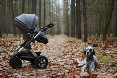 stokke trailz stroller adventure – all terrain – an amazing stroller for families who like hiking and the great outdoors! via Pretty Pleasure Blog