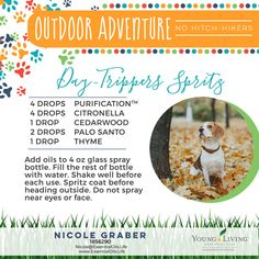 Keep the pests away with this doggy DIY that can also be used on humans! I would also add a pinch of salt to the bottle and shake well in order to disperse the oils better. Lavender can also be used in place of Palo Santo if you don't have that one yet. Essential Oils Dogs, Essential Oil Blends, Young Living Oils, Young Living Essential Oils, Esential Oils, Coconut Oil For Dogs, Oils For Dogs, Glass Spray Bottle, Yl Oils