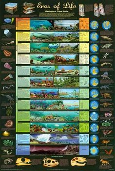 Eras of Life Geology Educational Science Chart Poster Prints at AllPosters.com Science Lessons, Life Science, Earth Science, Science And Nature, Prepa Concours, Science Chart, Life Poster, Poster Poster, History Timeline