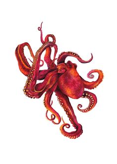 Red Octopus Watercolor Painting, Watercolor Illustration, Ocean Art, Hamptons Style, Archival Art Print