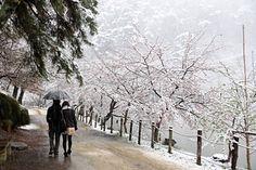 臥竜公園・桜開花状況 4/21(散り始め) Snow, Outdoor, Outdoors, Outdoor Games, The Great Outdoors, Eyes, Let It Snow