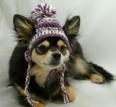 Dog hat crocheted Purple and white wool Small or by ShaggyChic, $15.00