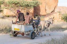 Image result Donkeys, Travelling, Horses, Bag, Cards, Animals, Purse, Animales, Animaux