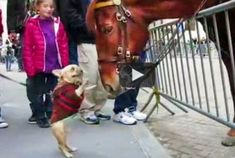 Post image for Dog Humor | bulldog become friends with police horse