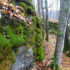 Bruce Trail exploration along the Niagara Escarpment Ontario, Fossil, Trail, Wanderlust, Hiking, Around The Worlds, Canada, Explore, Adventure