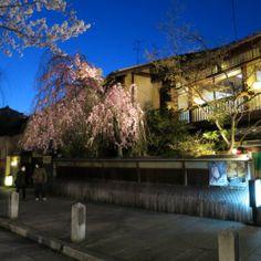 Kyoto 「Yozakura」