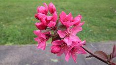 Spring Flower Albany, California