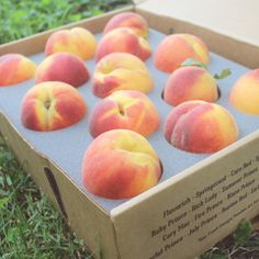 Gift Box of 13 Fresh Georgia Peaches | The Peach Truck.   Yum!  We have to have some of these for the Bellinis!