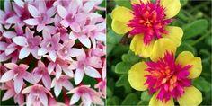 Plantas con flores todo el año. NATURALEZA TROPICAL nos muestra el contenido que estábamos esperando: ¿Cuáles serán las mejores plantas para tener todo el año flores preciosas en macetas?