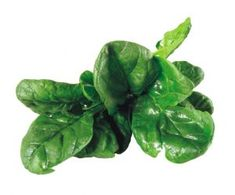 Benefits of Spinach - Nutritional Value of Spinach - Spinach Facts
