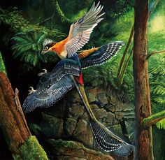 Dinosaurs of China: spectacular fossils show the link between dinosaurs and birds Prehistoric Wildlife, Prehistoric World, Prehistoric Creatures, Dinosaur Sketch, Dinosaur Art, Jurassic Park, Feathered Dinosaurs, Extinct Animals, Creature Concept