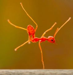 an ant doing a one hand stand