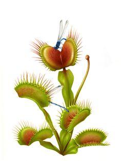 Botanical artwork for the magazine PARTERRE DE ROIS by Irene Laschi, via Behance