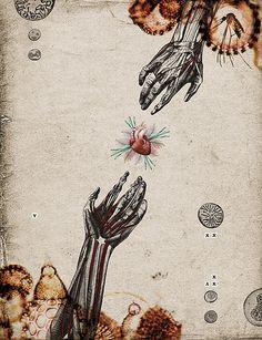 Biological - digital collage by Randy Mora, 2009 (ace) Art And Illustration, Anatomical Heart, Anatomy Art, Foto Art, Human Art, Freelance Illustrator, Science Art, Heart Art, Digital Collage