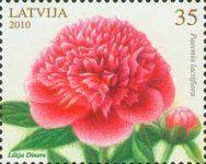 [Flowers - Peony, type UD]