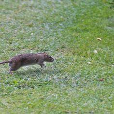 Turistas dividem espaço com ratos em jardim do Louvre