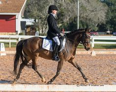 Karen has a few tips to polish this pair's dressage. Click here to see what she has to say!