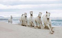 Six white horses at the sea.