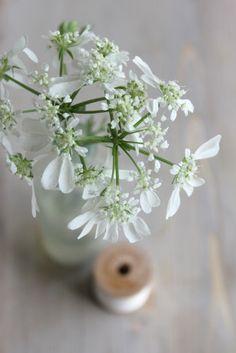 Calendrier des fleurs   la mariee aux pieds nus