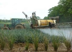 People's Tribunal Indicts 6 Pesticide Giants for Human Rights Violations