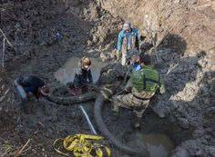 This Mysterious Mammoth Carcass Could Change Human History