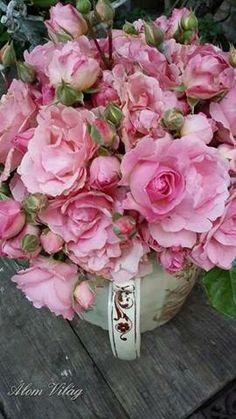 rózsák a tetőről