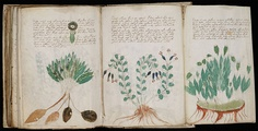 The Voynich Manuscript is one of the oddest objects from history. Written around the 15th or 16th century, it's a book that seems to be an encyclopedia from another world, written in a script that appears to be real. It has confounded minds for many years.