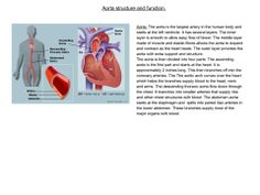 The aorta is the largest and most important artery in the entire body. (Human Biology)