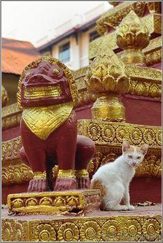 chat et statuette Cambodgienne