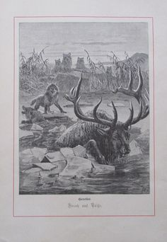 Antique Print Dated 1874 A Race For Life Deer Being Hunted By Wolf Large Engraving By Joseph Wolf Home Decor Art Race For Life, Wolf, Antique Prints, All Print, The Book, Joseph, Deer, Moose Art, Dating