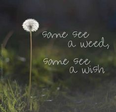 """10 Perspective Quotes - """"Some see a weed, some see a wish. Positive Quotes, Motivational Quotes, Inspirational Quotes, Motivational Thoughts, Positive Thoughts, Deep Thoughts, Quotes For Kids, Quotes To Live By, Wisdom Quotes"""