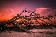 Branching Out by Parisa Salehi on 500px