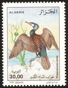 Algérie: Phalacrocorax carbo - Cormorão 1988