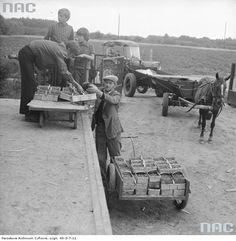Punkt skupu owoców. Rolnik podaje łubianki z malinami z dwukołowego wózka. W tle wóz konny i ciągnik innych dostawców.