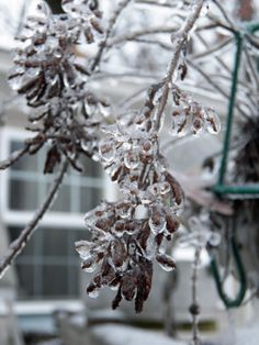 My Plants Wearing  Ice 2013 by penny pausch on Capture Arkansas // I get fascinated with the simplest of things.  I think it is beautiful!