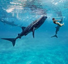 Swimming with whale sharks in Mexico! Totally on my bucket list