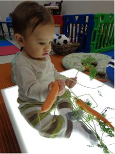 Infants enjoy the leafy green end of carrots and explore the texture.