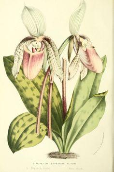 v.14 (1859-1861) - Flore des serres et des jardins de l'Europe - Biodiversity Heritage Library