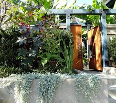 Striking garden gate! (Love the castor bean and silver ponyfoot too.)